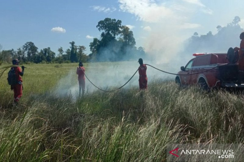 Pihak Taman Nasional Rawa Aopa Watumohai (TNRAW) di Kabupaten Konawe Selatan (Konsel), Provinsi Sulawesi Tenggara (Sultra) tengah berupaya memadamkan api di kawasan taman nasional tersebut, Senin (24/8/2020). (ANTARA - HO/TN Rawa Aopa Watumohai)