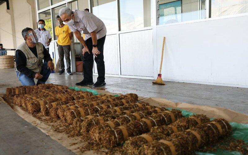 Gubernur Jateng Ganjar Pranowo melihat pembelian tembakau di Gudang PT Gudang Garam di Desa Bulu, Temanggung, Selasa (25/8/2020). - Ist