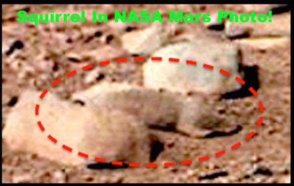Foto dari NASA yang menduga tupai alien hidup di Planet Mars. - NASA