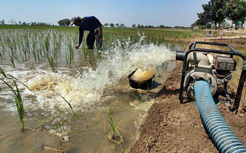 Balai Wilayah Sungai Sumatera-1 mengemukakan bahwa saluran irigasi Lhok Guci, Kabupaten Aceh Barat, yang merupakan salah satu proyek strategis nasional di Aceh akan mulai mengairi sawah seluas 400 hektare pada Oktober 2020.  - sda.pu.go.id