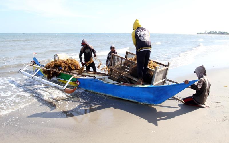 Nelayan memindahkan rumput laut yang dipanennya di Kabupaten Bantaeng Sulawesi Selatan, Senin (4/9 - 2019). BISNIS.COM