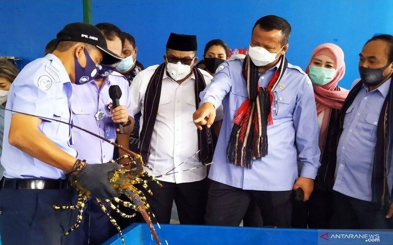Menteri Kelautan dan Perikanan Edhy Prabowo (ketiga kanan) melihat proses pemijahan lobster jenis mutiara, pasir dan bambu di Balai Perikanan Budidaya Laut (BPBL) Ambon, di Desa Waiheru, Kecamatan Baguala, Kota Ambon, Minggu (30/8/2020). - Antara/Jimmy Ayal