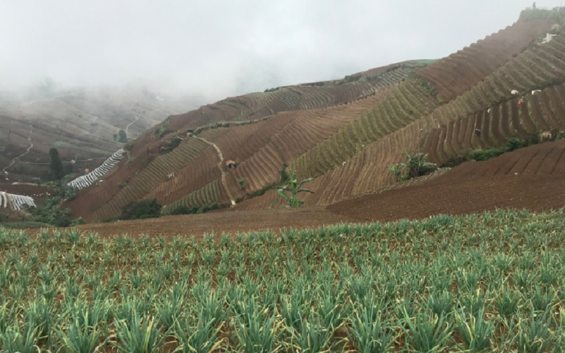 Kawasan pertanian di Panyaweuyan, Kabupaten Majalengka - Bisnis/Hakim Baihaqi