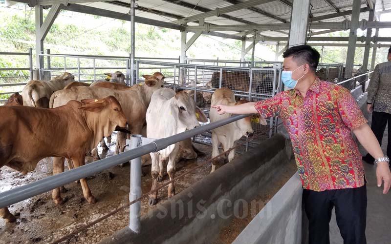 Safuan Kasno Soewondo, Head of Cattle Fattening PT Santosa Agrindo (Santori), anak usaha PT JAPFA, meninjau sapi milik mitra peternak di Bumi Kemitraan Santori di Gunung Kawi Kabupaten Malang, Jawa Timur, Selasa 1 September 2020. - Bisnis/Choirul Anam