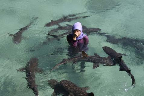 Berenang bersama anak hiu. - ilustrasi