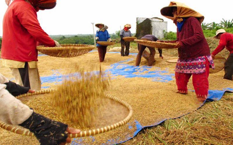 Para petani memilah gabah hasil panen di desa Dawuan, Subang. -  Antara / Arief Luqman Hakim