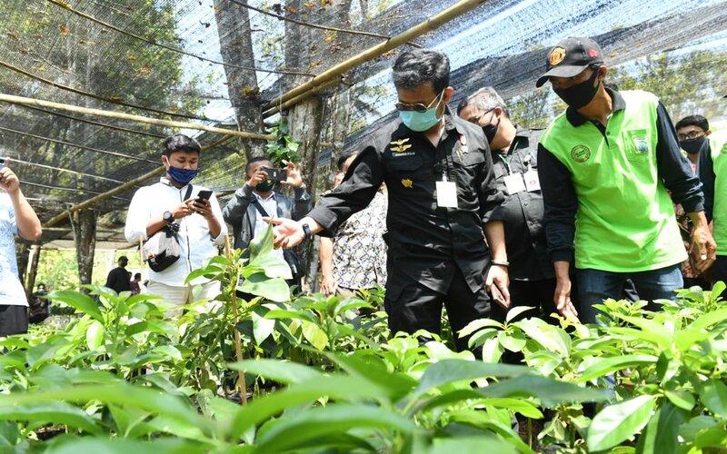 Mentan Syahrul Yasin Limpo (kiri) saat melihat bibit pohon alpukat di Kabupaten Malang, Kamis (3/9/2020). - Istimewa