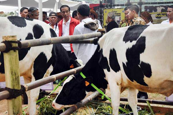 Presiden Joko Widodo (keempat kiri) berbincang dengan peternak sapi saat menghadiri Jambore Peternakan Nasional 2017 di Buperta Cibubur, Jakarta, Minggu (24/9). - ANTARA/Indrianto Eko Suwarso