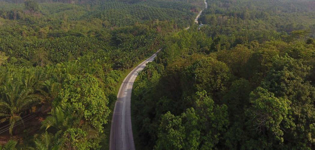 Sebuah jalan yang mleintasi perkebunan kelapa sawit di Kalimantan, Indonesia. Fotografer: Dimas Ardian  -  Bloomberg