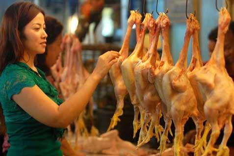 Ilustrasi: daging ayam