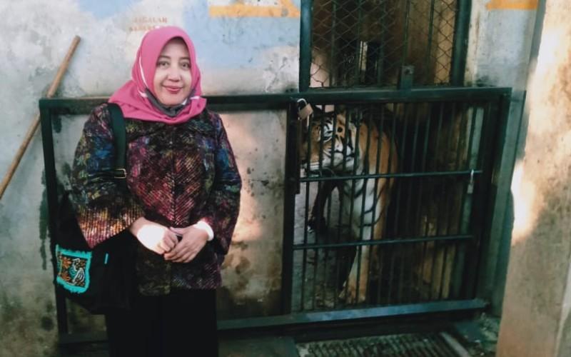 Salah satu pejabat Pemprov Jatim turun langsung ke Maharani Zoo untuk memastikan kondisi Harimau yang viral dalam sebuah video di media sosial lantaran berpenampakan kuru - Twitter/@EmilDardak
