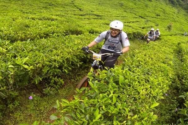 Pesepeda gunung yang tergabung dalam komunitas Journalist MTB (JMTB) mengayuh sepeda di antara tanaman teh di Jalur Rindu Alam kawasan Puncak, Bogor, Jabar - Antara