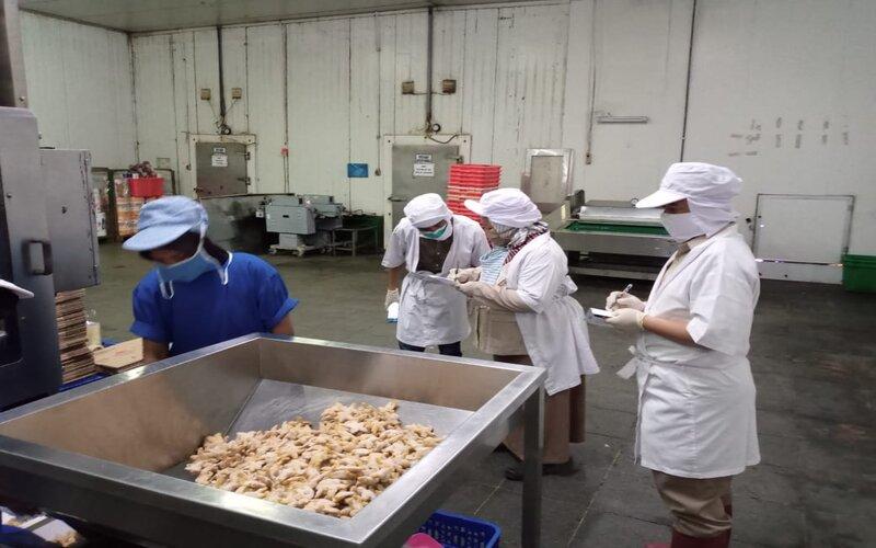 Petugas mengecek ikan hasil tangkapan nelayan untuk diekspor ke pasar luar negeri, Selasa (15/9/2020). - Ist