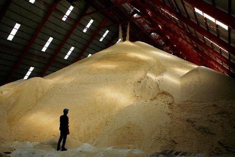 Target investasi pabrik gula baru ini merupakan bagian dari rencana jangka menengah Kementan untuk memenuhi kebutuhan gula dalam negeri.  - Bisnis.com