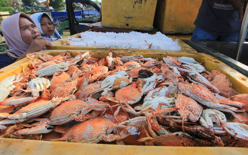 Rajungan hasil tangkapan nelayan di Desa Pabean udik, Indramayu, Jawa Barat, Kamis (16/4 - 2020). ANTARA