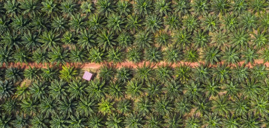 Foto aerial kebun kelapa sawit milik Genting Plantations Bhd. di Johore, Malaysia, Kamis (14/11/2019). - Bloomberg/Joshua Paul\\r\\n