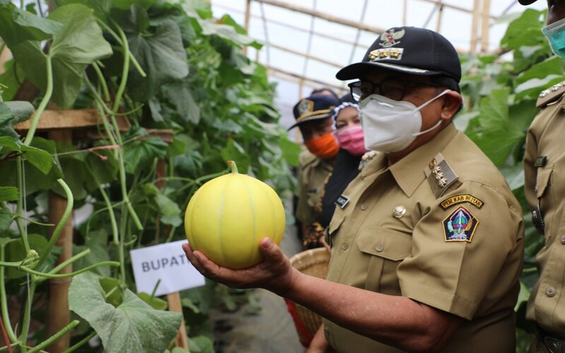 Bupati Blitar Rijanto saat menghadiri panen raya melon jenis adinda di Desa Sumberkembar Kecamatan Binangun, Selasa (22/09/2020). - Istimewa