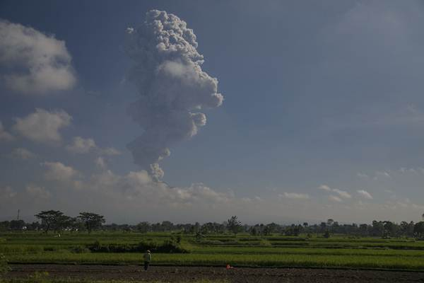 Gunung Merapi jadi latar belakang persawahan di kawasan Prambanan, Klaten, Jawa Tengah. - Antara/Hendra Nurdiyansyah