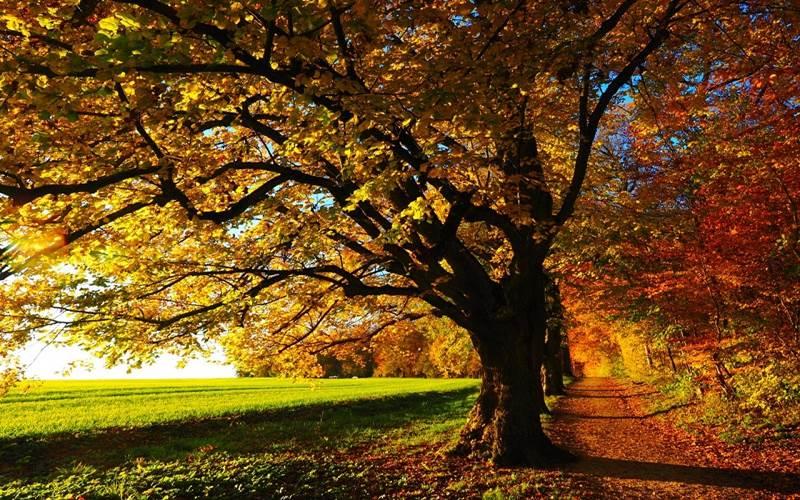 Ilustrasi pohon di musim gugur