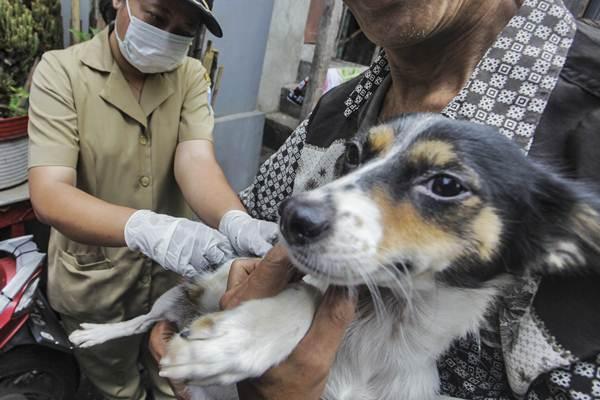 Petugas Dinas Ketahanan Pangan, Kelautan, dan Perikanan (KPKP) menyuntikan vaksin rabies ke anjing peliharaan milik warga di kawasan Mangga Dua Selatan, Jakarta, Selasa (8/1/2019). - ANTARA FOTO/Muhammad Adimaja