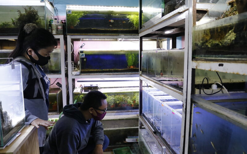 Pengunjung ke kios Aquatico Aquascape, Semarang.