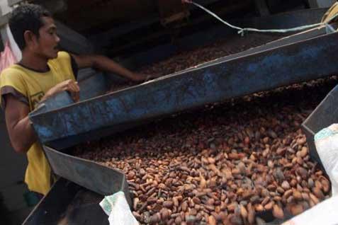 Jatim terdapat sejumlah sentra tanaman kakao dengan memberdayakan masyarakat sekitarnya, di antaranya seperti di perkampungan coklat di Blitar, Madiun, Jember serta Mojokerto.