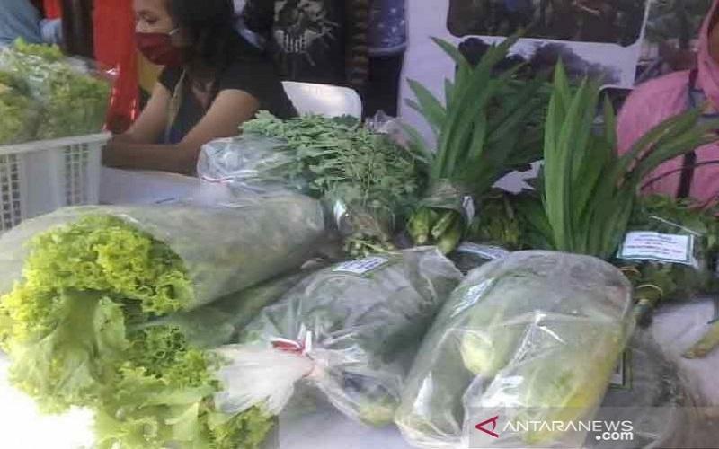 Ini salah satu hasil panen dari kelompok program pekarangan pangan lestari (P2l) yang dijual pada pameran dalam rangka diversifikasi pangan lokal di Palu beberapa waktu lalu - Antara
