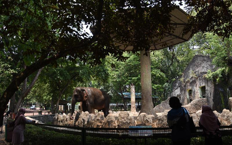 Warga melihat satwa saat berkunjung di Taman Margasatwa Ragunan, Jakarta, Minggu (13/9/2020). Tamansatwa Ragunan kembali ditutup untuk pengunjung mulai 14 September 2020 seiring rencana PSBB Total oleh Pemerintah Provinsi DKI Jakarta.  - ANTARA