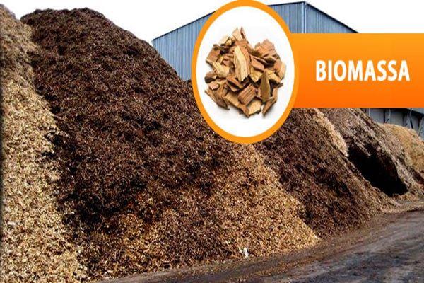 Biomassa - Ilustrasi/ptpjb.com