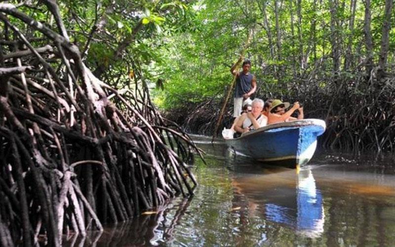 Hutan mangrove Munjang di Bangka Tengah, Bangka Belitung. - Pemkab Bangka Tengah