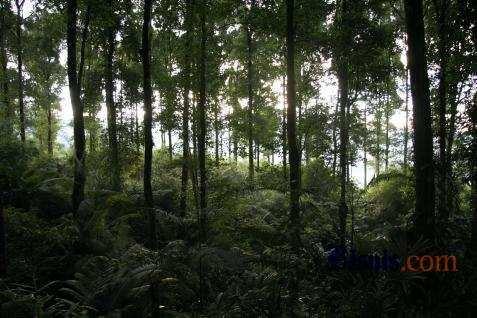 Pengesahan UU Cipta Kerja yang bertujuan mendorong kegiatan investasi harus tetap memerhatikan konservasi hutan dan lahan.