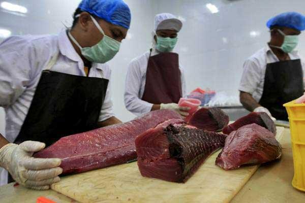 Pekerja membersihkan dan memotong ikan tuna untuk diekspor. Tuna sirip biru atau yang dikenal sebagai southern bluefin tuna (Thunnus maccoyii) merupakan salah satu jenis ikan ekonomis penting yang harganya pernah menembus rekor dunia dengan harga Rp25 miliar untuk satu ekor tuna berbobot 276 kilogram.  - ANTARA/Irwansyah Putra