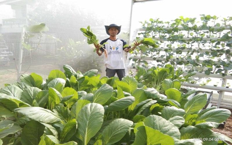 Adie Alqodery, 42 tahun, owner Green Corner Hydroponic Palembang, menunjukkan panen tanaman hidroponik. istimewa