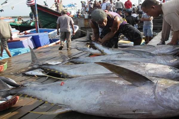 Investor asal Yordania Mr Iyad Al Shorafa melalui perusahaanya PT Tasali Jordan Trading, berkeinginan membeli ikan tuna