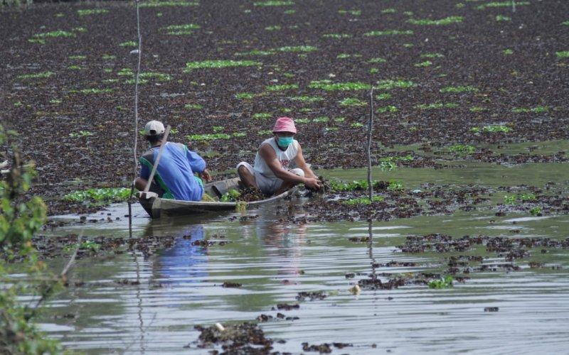 Ilustrasi: Warga terdampak Covid/19 mengikuti program padat karya Pemkab Musi Banyuasin, Sumsel, yakni membersihkan Danau Siarak di daerah tersebut. istimewa