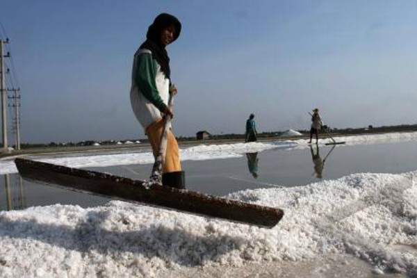Petani garam. Sejak 2015 hasil garam Sabu Raijua telah diserap oleh industri tekstil dan makanan. Pihaknya selama ini mendistribusikan garam ke Surabaya dan beberapa daerah di Pulau Sumatra.  - Ilustrasi