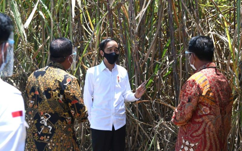 Presiden Joko Widodo meninjau kebun tebu dalam acara peresmian pabrik gula PT Alam Gemilang di Bombana, Sulawesi Tenggara, Kamis (22/10/2020) - Biro Pers Sekretariat Presiden/Lukas