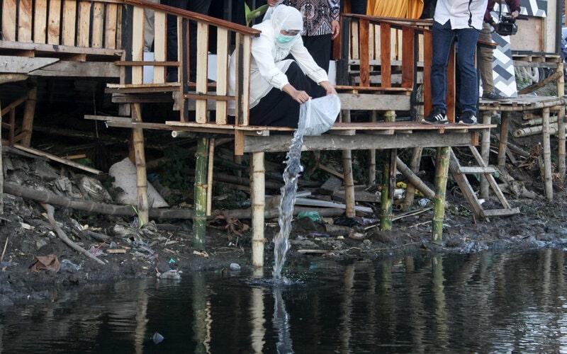 Gubernur Jawa TImur Khofifah Indar Parawansa menebar benih ikan di sungai kawasan Kalidawir, Tanggulangin, Sidoarjo, Jawa Timur, Sabtu (24/10/2020). Kegiatan menabur ribuan benih ikan tersebut sebagai wujud kepedulian terhadap kebersihan sungai serta mengajak masyarakat untuk menjaga kelestarian ekosistem lingkungan sungai. - Antara/Umarul Faruq