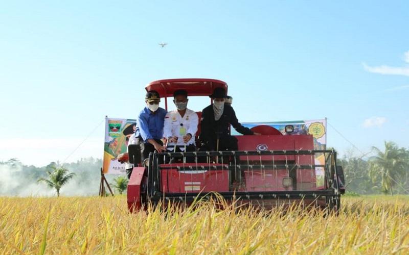 Menteri Pertanian Syahrul Yasin Limpo saat melakukan panen raya padi di Kecamatan 2x11 Enam Lingkung, Kabupaten Padang Pariaman, Sumatra Barat, Selasa (27/10/2020). - Istimewa