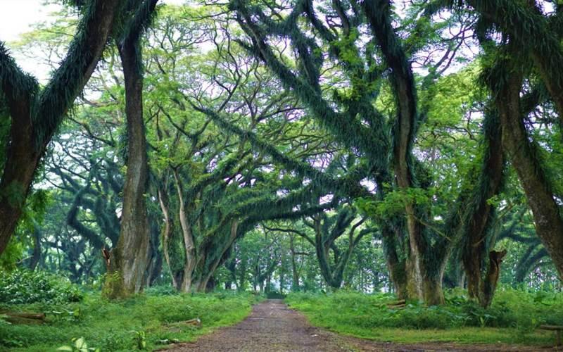 Hutan De Djawatan
