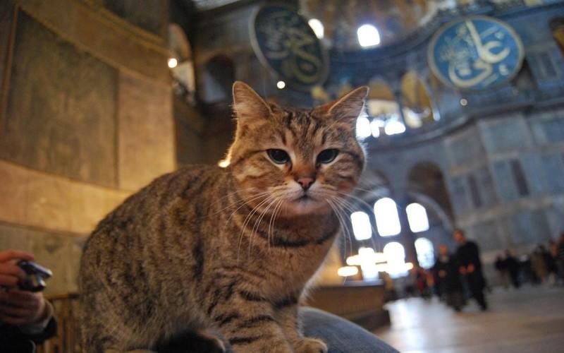 Gli kucing di Masjid Hagia Sophia