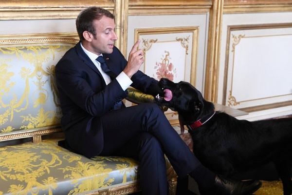 Arsip Foto. Presiden Prancis Emmanuel Macron mengangkat tangan di depan anjingnya Nemo disela rapat dengan Wakil Kanselir dan Menteri Luar Negeri Jerman di Istana Elysee, Paris, Prancis, Rabu (30/8/2017). - Reuters