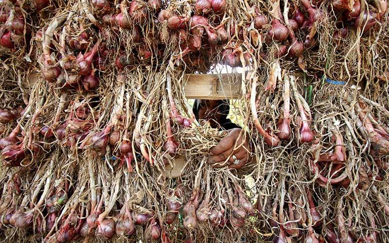 Ilustrasi petani menjemur bawang merah. Bawang merah termasuk pemicu inflasi di Tanjungpandang, Bangka Belitung./Bisnis - Arief Hermawan