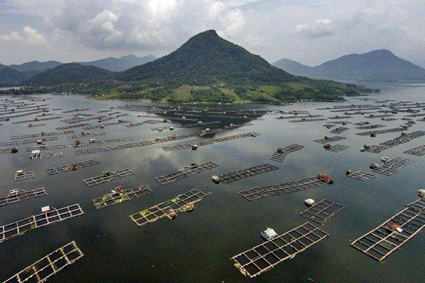 Foto aerial keramba jaring apung, di Waduk Jatiluhur, Purwakarta, Jawa Barat, Minggu (16/4). - Antara/Sigid Kurniawan