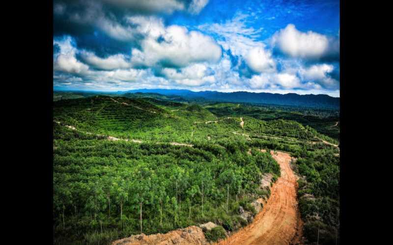 Kondisi Lingkungan di Kabupaten Lestari, Kalimantan Barat. - Istimewa