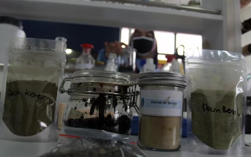 Lembaga Ilmu Pengetahuan Indonesia (LIPI) melakukan uji lab obat herbal dari daun ketepeng dan benalu bermarga dendroptoe untuk penyembuhan Covid-19 di Lab Cara Pembuatan Obat Tradisional Baik (CPOTB) Pusat Penelitian Kimia LIPI, Serpong, Tangerang Selatan, Banten. ANTARA - Muhammad Iqbal