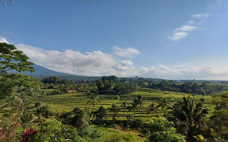 Kawasan sawah berundak juga dapat ditemukan di Desa Jatiluwih.