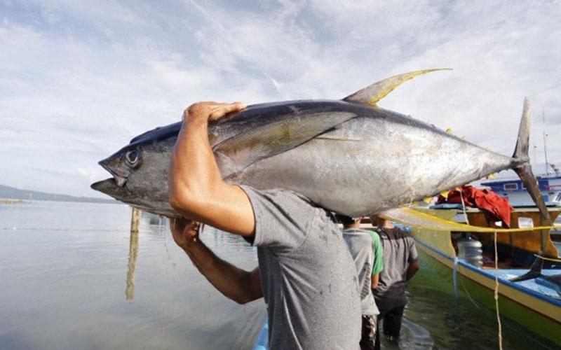 Seorang nelayan di Maluku memanggul ikan tuna. - Antara