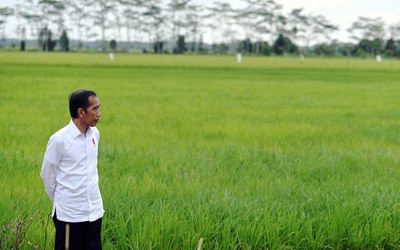 Presiden Joko Widodo meninjau lahan yang akan dijadikan food estate atau lumbung pangan baru di Kapuas, Kalimantan Tengah, Kamis (9/7/2020). Pemerintah menyiapkan lumbung pangan nasional untuk mengantisipasi krisis pangan dunia./Antara - Hafidz Mubarak