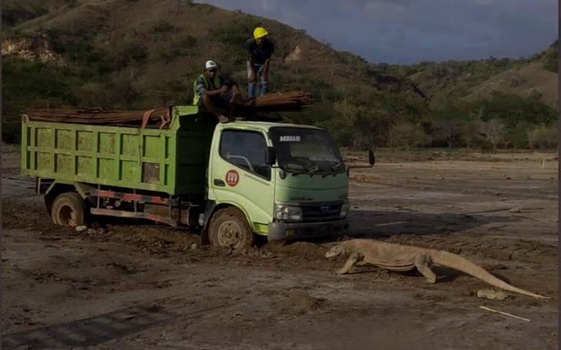 Komodo berhadapan dengan truk proyek penataan sarana dan prasarana wisata alamdi Taman Nasional Komodo. JIBI - Bisnis/Nancy Junita @Twitter Kawan Baik Komodo